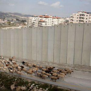 Israël-Palestine : Entre défis et espoir