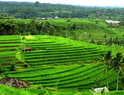 Bali : Entre émerveillement et questionnements